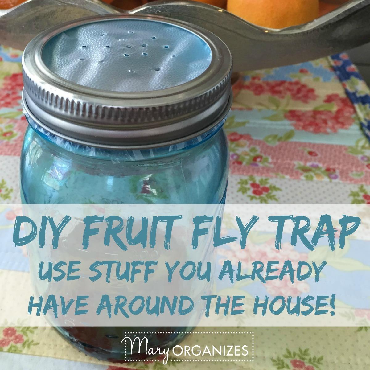 DIY Fruit Fly Trap -s