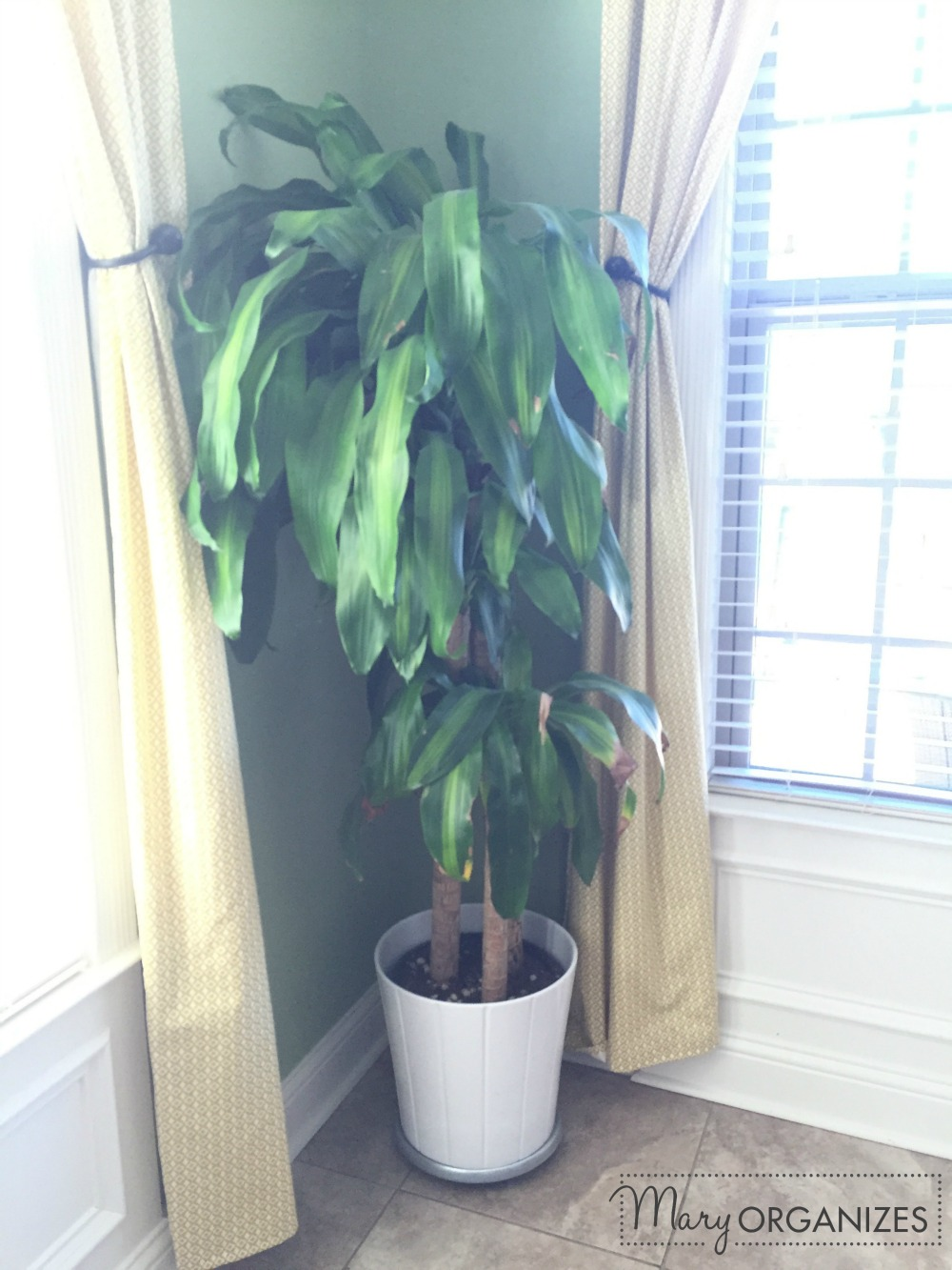 Mary Organizes - house plant still alive