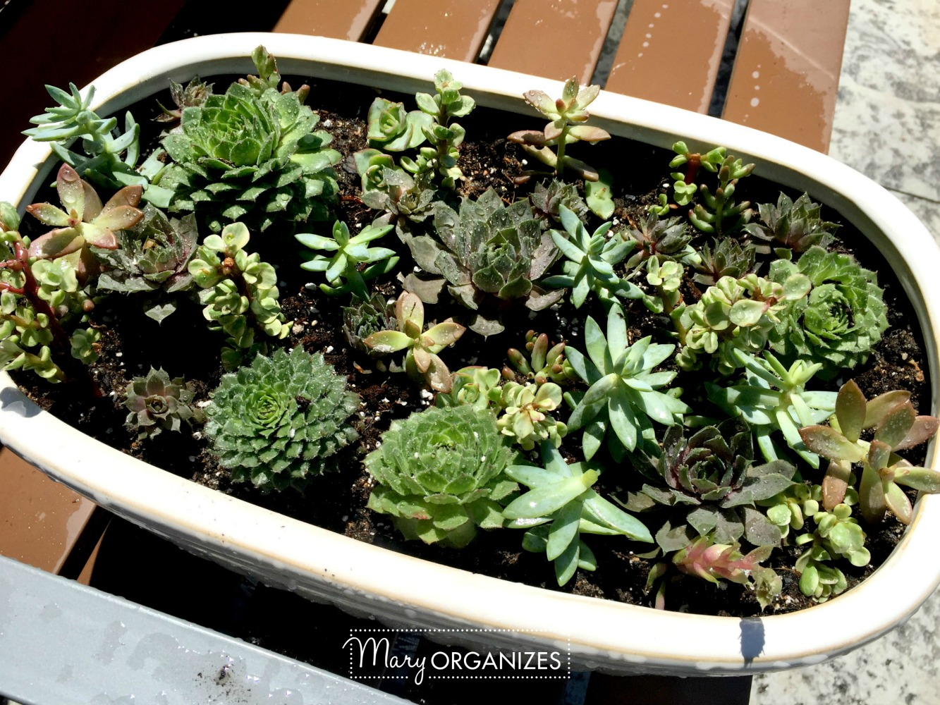 How To Re-Plant Succulents 7