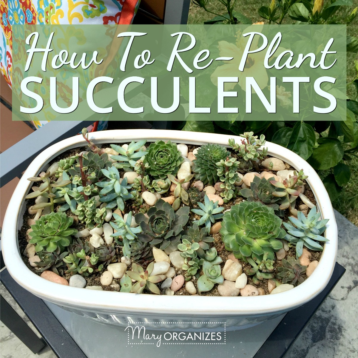 How To Re-Plant Succulents -s