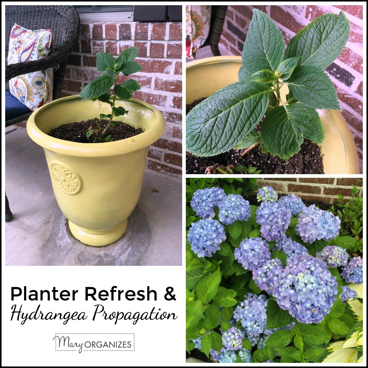 Planter Refresh and Hydrangea Propagation -s